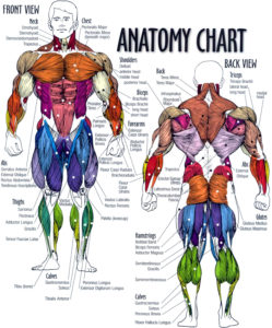 Asana Anatomy and Advanced Adjustments @ Louisiana Yoga Barn | Ruston | Louisiana | United States